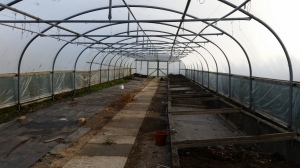 One of the large Polytunnels...